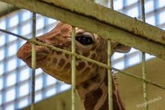 Frankfurt-Zoo-005