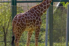 Frankfurt-Zoo-006