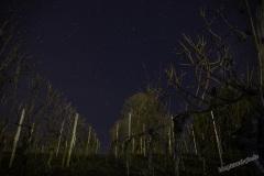 wuerzburg-night-06